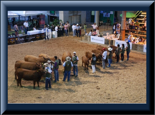 Imagen Feria Ganadera de Bucaramanga 2012