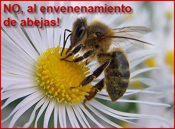 Las abejas se están muriendo en todo el mundo