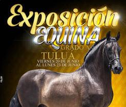 Exposicion Equina Grado A, en la Feria de Tuluá
