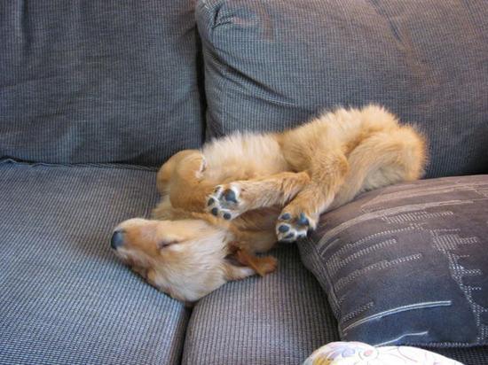 perritos-y-gatos adorables-17