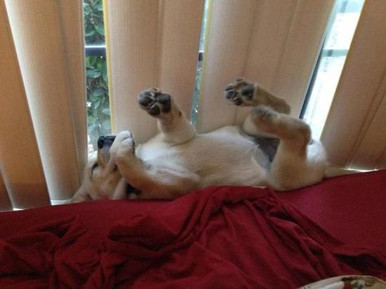 perritos-y-gatos adorables-18