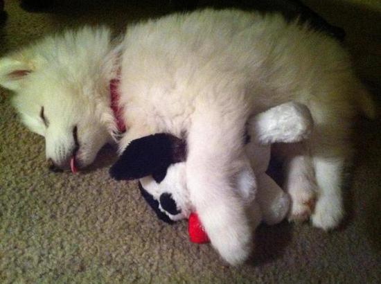 perritos-y-gatos adorables-21