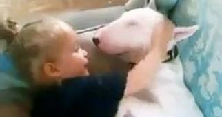 Cuidado! Peligroso Bull Terrier te puede matar… ¡de ternura!