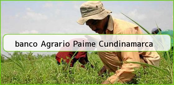<b>banco Agrario Paime Cundinamarca</b>