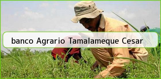 <b>banco Agrario Tamalameque Cesar</b>