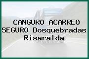 CANGURO ACARREO SEGURO Dosquebradas Risaralda