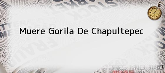 Muere Gorila De Chapultepec