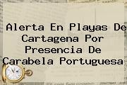 Alerta En Playas De Cartagena Por Presencia De <b>Carabela Portuguesa</b>