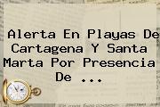 Alerta En Playas De Cartagena Y Santa Marta Por Presencia De ...