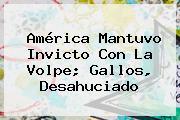 <b>América</b> Mantuvo Invicto Con La Volpe; Gallos, Desahuciado