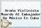 <b>Araña Violinista</b> Muerde Al Embajador De México En Cuba