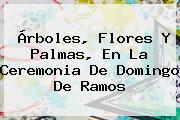 Árboles, Flores Y Palmas, En La Ceremonia De <b>Domingo De Ramos</b>