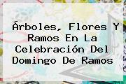 Árboles, Flores Y Ramos En La Celebración Del <b>Domingo De Ramos</b>