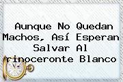 Aunque No Quedan Machos, Así Esperan Salvar Al <b>rinoceronte Blanco</b>