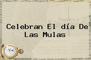 Celebran El <b>día De Las Mulas</b>
