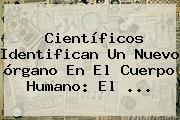 Científicos Identifican Un Nuevo órgano En El Cuerpo Humano: El ...