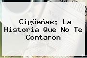 <b>Cigüeñas</b>: <b>La Historia Que No Te Contaron</b>