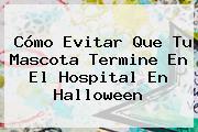 Cómo Evitar Que Tu Mascota Termine En El Hospital En <b>Halloween</b>