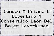 Conoce A Brian, El Divertido Y Consentido León Del <b>Bayer Leverkusen</b>
