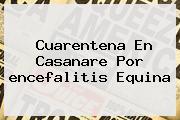 <u>Cuarentena En Casanare Por Encefalitis Equina</u>