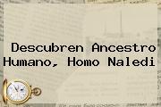 Descubren Ancestro Humano, <b>Homo Naledi</b>