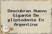 Descubren Huevo Gigante De <b>gliptodonte</b> En Argentina