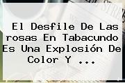 El Desfile De Las <b>rosas</b> En Tabacundo Es Una Explosión De Color Y <b>...</b>