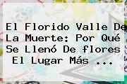 El Florido Valle De La Muerte: Por Qué Se Llenó De <b>flores</b> El Lugar Más <b>...</b>