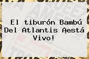 El <b>tiburón Bambú</b> Del Atlantis ¡está Vivo!