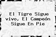 El Tigre Sigue <b>vivo</b>, El Campeón Sigue En Pie