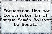 Encuentran Una <b>boa Constrictor</b> En El Parque Simón Bolívar De Bogotá