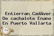 Entierran Cadáver De <b>cachalote</b> Enano En Puerto Vallarta
