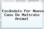 Escándalo Por Nuevo Caso De Maltrato Animal