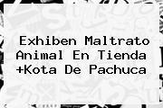 Exhiben Maltrato Animal En Tienda +<b>Kota</b> De Pachuca
