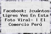 Facebook: ¿cuántos <b>tigres</b> Ves En Esta Foto Viral?   El Comercio Perú