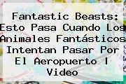 <b>Fantastic Beasts</b>: Esto Pasa Cuando Los Animales Fantásticos Intentan Pasar Por El Aeropuerto   Video
