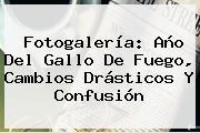 Fotogalería: <b>Año Del Gallo</b> De Fuego, Cambios Drásticos Y Confusión