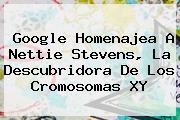 Google Homenajea A <b>Nettie Stevens</b>, La Descubridora De Los Cromosomas XY