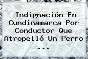 Indignación En Cundinamarca Por Conductor Que Atropelló Un Perro ...