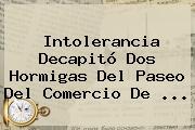 Intolerancia Decapitó Dos Hormigas Del Paseo Del Comercio De <b>...</b>