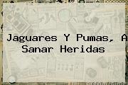 Jaguares Y <b>Pumas</b>, A Sanar Heridas