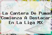 La Cantera De <b>Pumas</b> Comienza A Destacar En La Liga MX