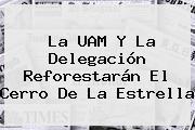 La <b>UAM</b> Y La Delegación Reforestarán El Cerro De La Estrella