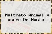 Maltrato Animal A <b>perro De Monte</b>