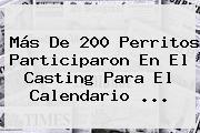 Más De 200 Perritos Participaron En El Casting Para El <b>Calendario</b> ...