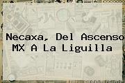 <b>Necaxa</b>, Del Ascenso MX A La Liguilla