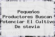Pequeños Productores Buscan Potenciar El Cultivo De <b>stevia</b>