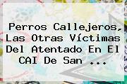 Perros Callejeros, Las Otras Víctimas Del Atentado En El <b>CAI</b> De <b>San</b> ...