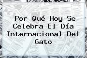 Por Qué Hoy Se Celebra El <b>Día Internacional Del Gato</b>
