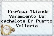 Profepa Atiende Varamiento De <b>cachalote</b> En Puerto Vallarta